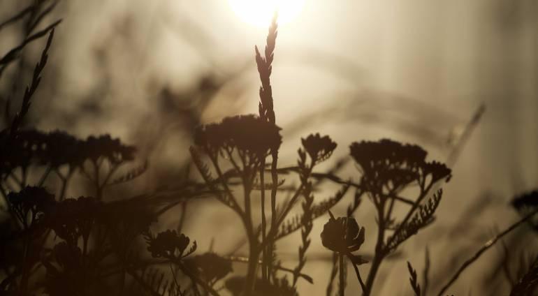 Dissociation – solving the ridlle